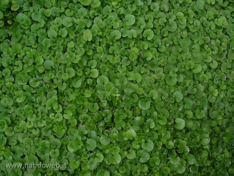 Giardino - Quando seminare erba giardino ...